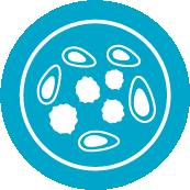 peripheral blood mononuclear cell icon (PBMC)